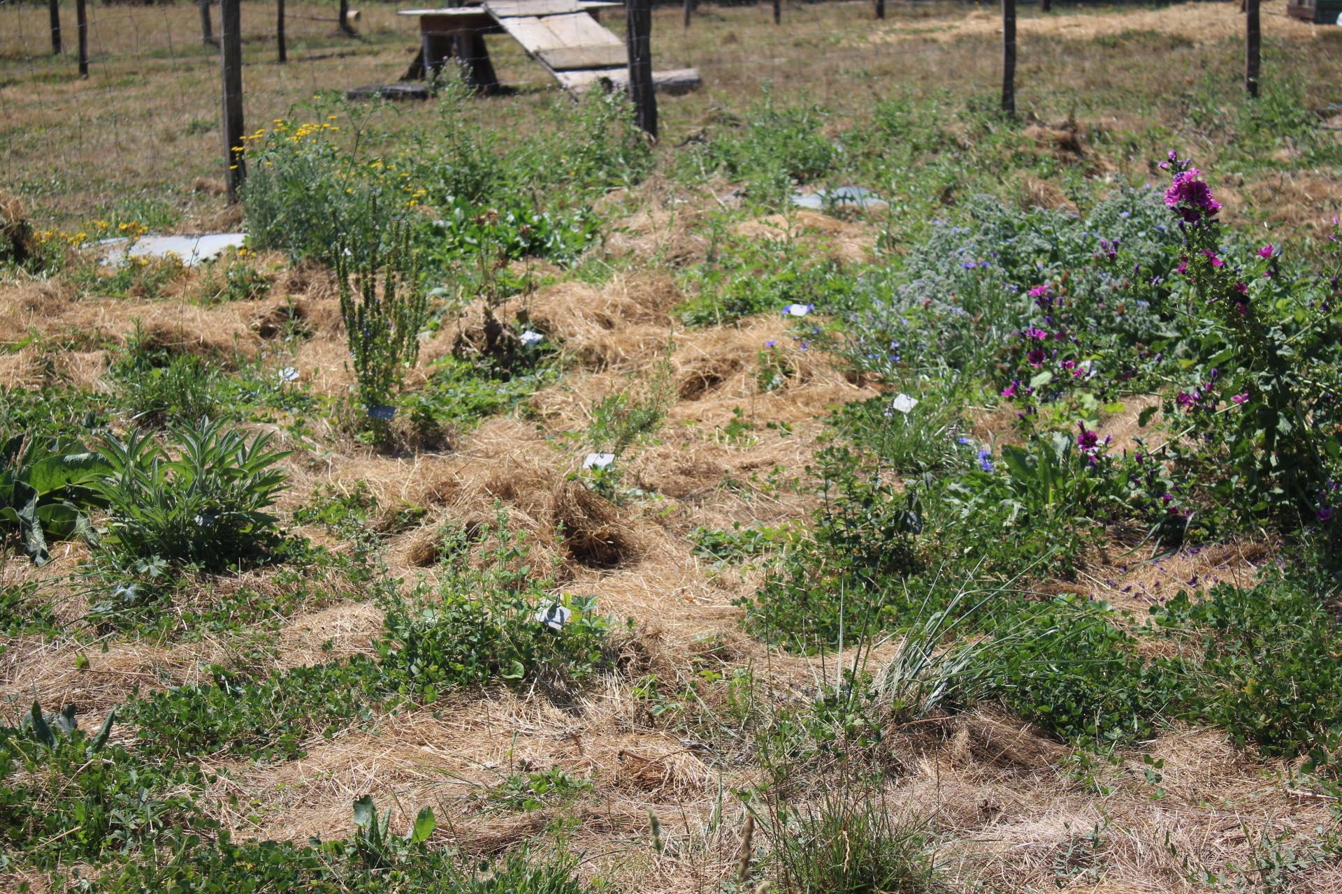 Découverte de notre jardin en permaculture