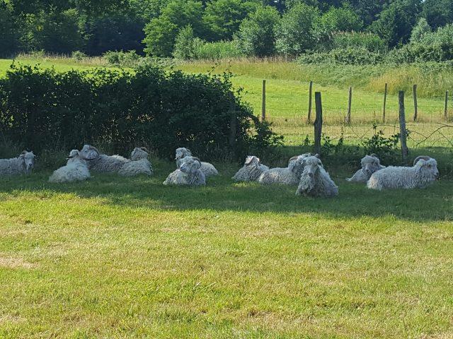 La vie paisible des chèvres